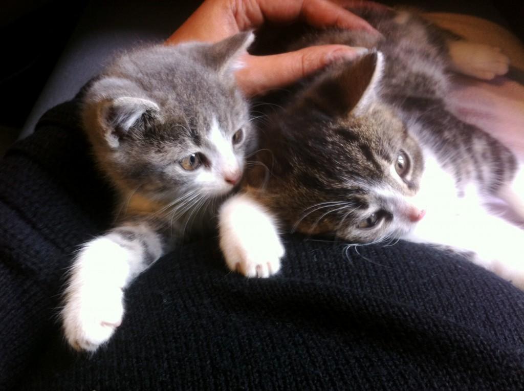 """<span class=""""fancy-title"""">Wachstum</span><span>…oder Nachwuchs Seit Ende Oktober 2012 haben mein Partner und ich zwei Katzen: Cleo und Charly. Interessant sind die Reaktionen ... </span>"""