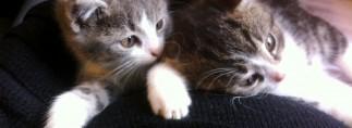 Katzen1